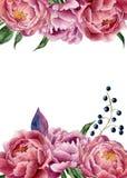 Invitación floral de la boda de la acuarela Dé el marco exhausto del vintage con la peonía, las hojas y las bayas Aislado en el f stock de ilustración