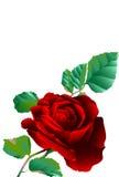 Invitación floral para los acontecimientos de vida Imagen de archivo