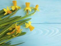 Invitación hermosa de los narcisos en un fondo de madera azul rústico de la boda romántico Imagen de archivo libre de regalías