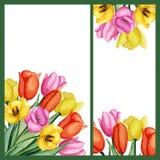 Invitaciones de los tulipanes fijadas Fotos de archivo libres de regalías