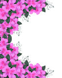 Invitation Border Pink Azaleas Royalty Free Stock Image