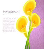 Invitation with callas flowers Stock Image