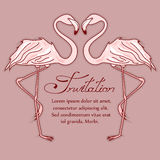 Invitation card with flamingos Stock Images