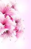 Invitation card with flower Stock Photos