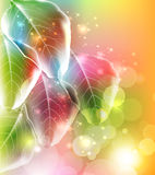 Invitation card with leaves Stock Photo