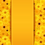 Invitation card with yellow and orange gerbera flowers Stock Image
