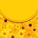 Invitation card with yellow and orange gerbera flowers. Vector eps-10. Stock Photos