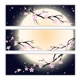 Invitation cards with stylized cherry blossom. Stock Images