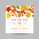 Invitation or Greeting Card Set Royalty Free Stock Image