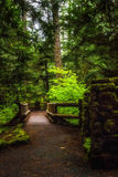 Invitation. An inviting walkway along the Waterfall Trail between Sahalie and Koosah Falls along the McKenzie River in Oregon royalty free stock photos