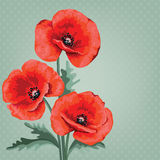 Invitation or wedding card with abstract floral background. Red poppy. Red poppy. Card with flowers Vector Illustration