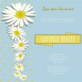 Invite al vintage con las flores de la manzanilla y el texto de la muestra Foto de archivo
