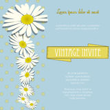 Invite vintage with chamomile flowers and sample text Stock Photo