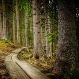 Inviterande bana djupt i den härliga skogen royaltyfria foton