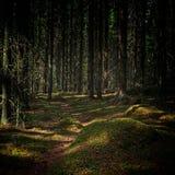 Inviterande bana djupt i den h?rliga skogen arkivbild