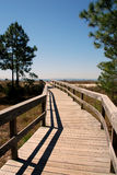 Inviting boardwalk to beach. Inviting wood boardwalk to beach on Hilton Head Island, SC, pale blue, cloudless sky, white pine trees on the side. High sun light Stock Photos