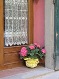 Inviting doorway. With lace curtain and potted hydrangea Royalty Free Stock Images