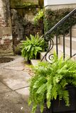 Inviting Outdoor Garden with an Old Brick Wall Royalty Free Stock Image
