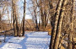 Inviting Path Through Snow With Fence Shadows. Inviting snowy path leads through a quiet winter forest with interesting fence shadows giving it a dappled effect royalty free stock photos