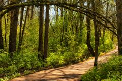 Inviting path way along a nature trail. An inviting nature path with a natural arch of tree branches Royalty Free Stock Photos