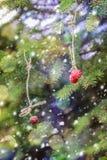 Invito di nuovo anno Fragole che appendono su un ramo attillato Immagini Stock