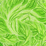 Involute leaves Stock Image