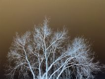 Inwertowany drzewo Zdjęcia Stock
