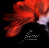 Inwertowany miękki ostrość kwiatu tło z kopii przestrzenią Zdjęcie Stock