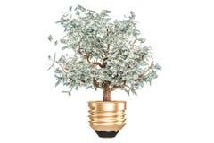 Inwestycja lub energia - savings pojęcie Lightbulb z pieniądze drzewem Zdjęcia Stock