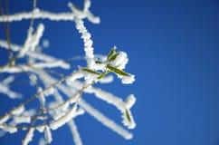 Iny sur les feuilles d'un arbre Photo stock