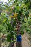 Inympa på fruktträdet Arkivfoto