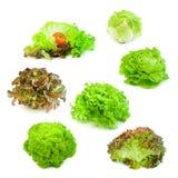 Inzameling 01 van de salade Stock Foto's