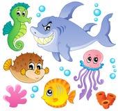 Inzameling 4 van zeevissen en van dieren Royalty-vrije Stock Foto's