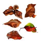 Inzameling Geïsoleerd Autumn Leaves, Stock Afbeeldingen
