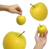 Inzameling van appelen Stock Fotografie