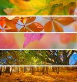 Inzameling van Autumn Banners - de abstracte achtergrond van het dalingsseizoen Royalty-vrije Stock Afbeeldingen