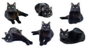 Inzameling van beelden van zwarte kat Stock Afbeeldingen