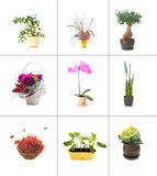 Inzameling van bloemen Royalty-vrije Stock Afbeeldingen