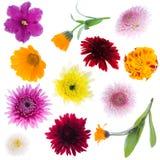 Inzameling van bloemen royalty-vrije stock afbeelding