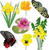 Inzameling van bloemen en vlinders Stock Fotografie