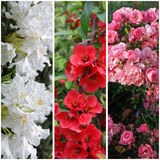 Inzameling van bloemen: roze, rood en wit Stock Fotografie