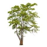 Inzameling van bomen op witte achtergrond wordt geïsoleerd die Stock Afbeelding