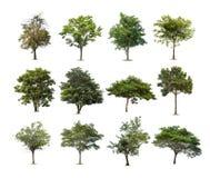 Inzameling van bomen op witte achtergrond wordt geïsoleerd die Royalty-vrije Stock Fotografie