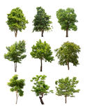 Inzameling van bomen op witte achtergrond wordt geïsoleerd die Royalty-vrije Stock Foto's