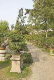 Inzameling van bonsaibomen in een tuin stock foto's