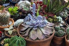 Inzameling van cactus en succulents installatie in de tuin Klein c royalty-vrije stock afbeelding