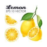 Inzameling van citroenen Stock Afbeeldingen