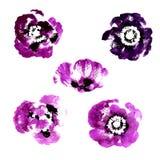 Inzameling van de bloemen van de waterverfpapaver royalty-vrije illustratie