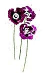 Inzameling van de bloemen van de waterverfpapaver vector illustratie