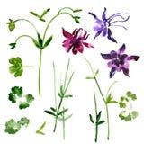 Inzameling van de bloemen van waterverfaquilegia vector illustratie